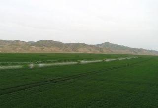L'Azerbaïdjan et l'Allemagne mettent en œuvre des projets agricoles conjoints